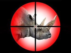 IBM and MTN have teamed up to fight rhino poaching.