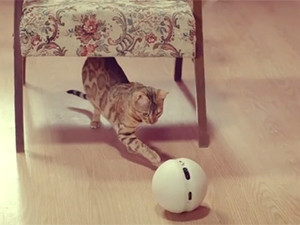 LG's Rolling Bot has an inbuilt laser pointer that will allow cat owners to play with their cats when they are not home.