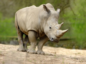 Axis Communications has sponsored three advanced security cameras for a rhino sanctuary in Limpopo.