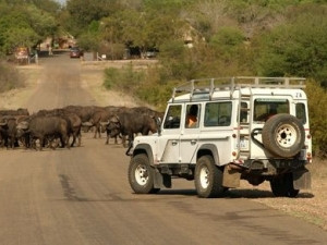 SANParks is now exploring a ban or restriction on mobile apps in the Kruger National Park.
