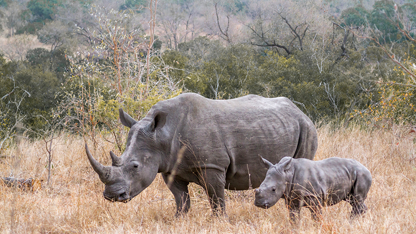Machine learning helps protect Africa's wildlife